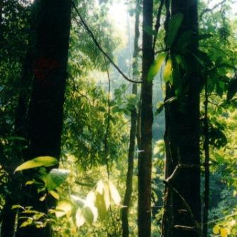 Photos » hutan-tropis